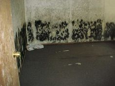 1095 best black mold symptoms images black mold symptoms mold rh pinterest com