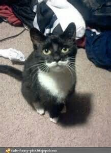 Another adorable mustache cat!!