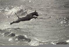 Beach #Bullie Quiero ver a mi rayo así @giocogioco