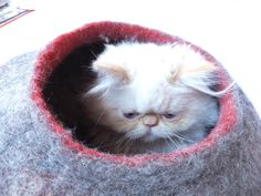 AWWWW. he looks so sad :( I want to squeeze him into happiness! Cat vessel/Cat bed/Cat house/Cat cave Handmade from by Grazim, $55.00