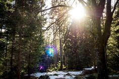 Weiter ging es auf der Strecke. Mit diesem Foto grüße ich Herrn @torstencantilever. Ich sag nur Lens Flare! . . . . . . .  #olympus #omd #olympusomd #em1 #olympuscamera #microfourthirds #harz #germany #wanderlust #brocken #teufelsstieg #harzmountains #neverstopexploring #mountain #hiking #hike #trekking #mountainlife #outdoor #mountaineering #mountainview #wilderness #forest #outdoors #trees #naturelover #wildlife #forest #instanature