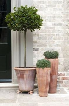 Olive tree and terracotta pot combination