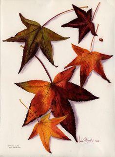 ~ Autumn Inspirations ~ Autumn leaves II 971 by Helen Fitzgerald Nature Illustration, Botanical Illustration, Floral Artwork, Australian Art, Watercolor Drawing, Wildlife Art, Autumn Inspiration, Botanical Art, Autumn Leaves
