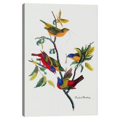 Add gallery-worthy appeal to your walls with this canvas print of Audubon's Painted Bunton. Display it alone as an artful focal point or group it with...