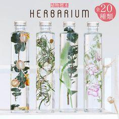 ハーバリウム-植物標本-