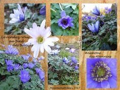 Les petits bonheurs du jardin -