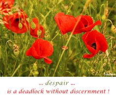 ... #despair ... is a deadlock without discernment !