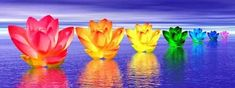 Picture of Chakra colors of lily flower upon water in blue night background stock photo, images and stock photography. Chakra Healing Music, Les Chakras, Spiritual Advisor, Blue Words, Online Psychic, Chakra Colors, Night Background, Tiffany Blue, Royalty Free Images