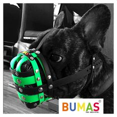 Dog Muzzle - Dog Owner Advice For People Unfamiliar With Dogs Dog Muzzle, Dog Anxiety, Separation Anxiety, Dog Care Tips, Be A Nice Human, Animal Welfare, Dog Behavior, Training Your Dog, Yorkie