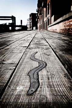 Eel on the River Hull board walk part of the fish trail Great Places, Places To See, Kingston Upon Hull, Hull City, East Yorkshire, North York, Pilgrimage, Great Britain, Old Town