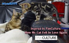 Inspired by PawCulture: How My Cat Fell In Love Again
