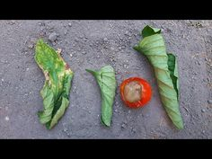 Asparagus, Plant Leaves, Stuffed Peppers, Vegetables, Garden, Plants, Food, Youtube, Studs