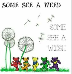 Some see a weed. Some see a wish. What do you see? Grateful Dead Quotes, Grateful Dead Tattoo, Grateful Dead Image, Grateful Dead Dancing Bears, Dead And Company, Forever Grateful, Music Is Life, Words, Phish