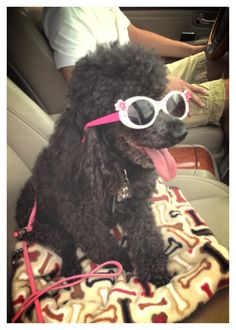 Fun with Poodles!