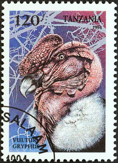 The Andean condor (Vultur gryphus)  stamp printed in Tanzania , circa 1994