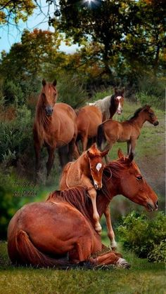 Would be a beautiful picture on the wall a mural All The Pretty Horses, Beautiful Horses, Animals Beautiful, Farm Animals, Animals And Pets, Cute Animals, Majestic Horse, Mundo Animal, Horse Pictures