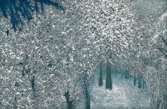 The Frozen Woods by Richard Cartwright