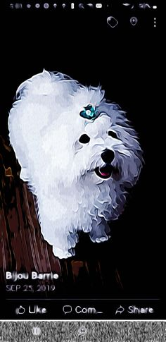 Dog Pop Art, Dogs, Movies, Movie Posters, Films, Pet Dogs, Film Poster, Doggies, Cinema