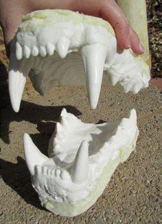 Huge-African-lion-death-cast-jaws-teeth-cast-taxidermy-replica