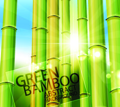 Vector Bamboo design elements background 04