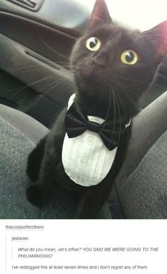 I THOUGHT WE WERE GETTING FANCY FEAST!