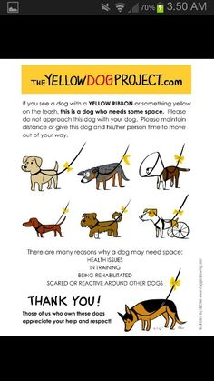 Everyone should be doing the Yellow Ribbon Project.  Its not just for mean dogs!