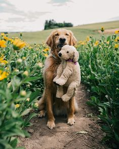 Find a friend to frolic through the fields with bademode Animals And Pets, Baby Animals, Funny Animals, Cute Animals, All Dogs, I Love Dogs, Best Dogs, Cute Puppies, Cute Dogs