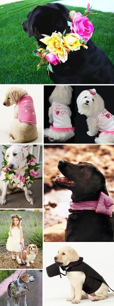 Awww.... look at these sweet little pets all dressed up for the Big Day! How To Re: Including Your Dog in Your Wedding