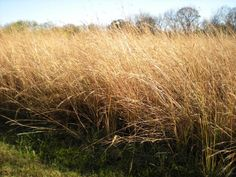New study: bio-oil and fast pyrolisis of biomass from North American grasslands