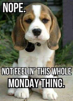 Monday Humor Quotes, Sarcastic Quotes, Funny Quotes, Funny Memes, Work Memes, Work Humor, Funny Monday Images, Monday Cat, Mondays