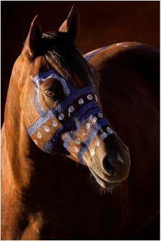Crow War Pony Photo