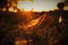 https://www.flickr.com/photos/143481946@N06/shares/57Z8Q3 | Las fotos de import1976