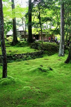 """2008年7月から始めた京都世界遺産めぐりの旅も、いよいよ最後になりました。<br /><br />西芳寺は通称""""苔寺""""と言われるほど、庭園一面に絨毯のように生い茂る苔が美しい寺で、特に梅雨時が最も苔が綺麗な時期だと言われています。<br /><br />今回はそんな一番美しいと言われる時期の、しかも雨上がりの時に行くことができました。<br /><br /><br /><br />★★★★★★★★★ 京都世界遺産めぐり ★★★★★★★☆ <br />http://4travel.jp/traveler/minikuma/album/10268782/<br /><br />おまけ↓↓↓<br />http://yaplog.jp/awamoko/archive/210"""