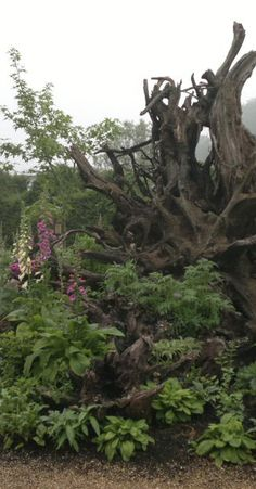 The stumpery at Arundel Castle, from https://greatgardensforkids.wordpress.com