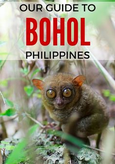 Our Guide to What to Do in Awesome Bohol