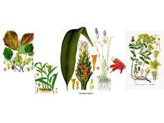 Τα πέντε ισχυρότερα αντιφλεγμονώδη βότανα