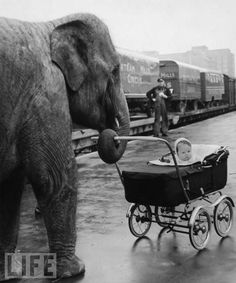 Writing Prompt: Tell the story of a day this child spent with his elephant nanny. This pinner has a huge collection of picture writing prompts. Cirque Vintage, Vintage Circus, Vintage Pram, Writing Pictures, Picture Writing Prompts, Essay Writing, Amazing Animals, Cute Animals, Baby Animals
