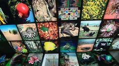 La aventura del saber. Centro de Biodiversidad de Euskadi