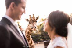 Charmaine and Keiran ~ Taronga Zoo wedding photography | http://yulia-photography.com.au/blog/charmaine-keiran-taronga-zoo-wedding-photography/