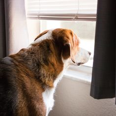 Make a plan for helping pets adapt to a post-quarantine routine. Cute Puppies, Cute Dogs, Routine, Corgi, Wolf, Beautiful Pictures, Cute Animals, Pets, Life