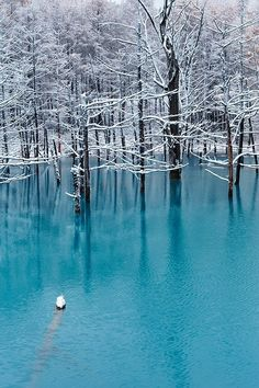 "The ""blue pond"" of the famous tourist resort in Biei, Hokkaido, Japan is a place where many tourists gather in spring, summer, and autumn. However, since this pond freezes in winter, nobody is there during that period. This photograph was taken during the first snow of the season as it fell over the blue pond."