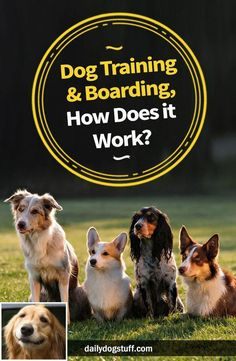 Mesmerizing Training Your Dog Proven, Useful Hints And Tips Ideas. Remarkable Training Your Dog Proven, Useful Hints And Tips Ideas. Dog Training Methods, Basic Dog Training, Dog Training Classes, Dog Training Techniques, Training Your Puppy, Potty Training, Training Dogs, Training Exercises, Crate Training