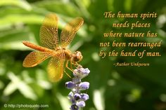 Image result for Spiritual Dragonfly Quotes