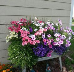 The flowers are actually in an old double washtub. Funny how just a few can spread so big!