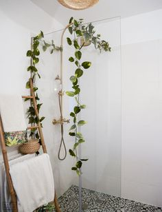 Home Sweet Home - PAON PAON Shower Plant, Getting Ready To Move, Sweet Home, Babe Cave, Biarritz, Plant Decor, Indoor Plants, Master Bathroom, Ladder Decor