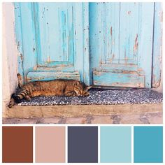 One of my favourite pics from my #trip to  #Tunisia  #mossomcolors #colorscheme #colorpalette