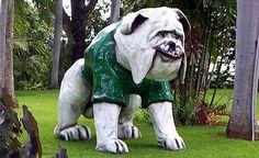 Mascota Colegio de Mayaguez,P.R.