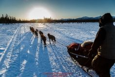 Hugh Neff runs down the trail after leaving the Kaltag checkpoint near sunset on Saturday March 12th during the 2016 Iditarod.  Alaska    Photo by Jeff Schultz (C) 2016  ALL RIGHTS RESERVED: Hugh Neff runs down the trail after leaving the Kaltag checkpoint near sunset on Saturday March 12th during the 2016 Iditarod.  Alaska    Photo by Jeff Schultz (C) 2016  ALL RIGHTS RESERVED