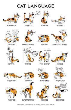 Cat body language with other cats cat ears flattened sideways,cat posture meaning how to learn cat language,what does cat behavior mean what does it mean when cats ears go back. I Love Cats, Crazy Cats, Cute Cats, Funny Cats, Adorable Kittens, Cute Cat Names, Cats Humor, 9gag Funny, Funny Laugh