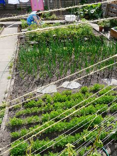 vegetable patch by leah halliday, via Flickr